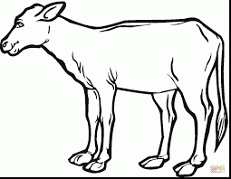 Superb Cow Calf Coloring Page With And Pages For Preschoolers