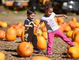 Pumpkin Patch With Petting Zoo by Fall Fun At Stamford U0027s Eden Farms Stamfordadvocate