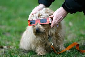 Solar Eclipse And Pets: Eye Protection And Preparation | PEOPLE.com Pets As Pilgrims Photos Peoplecom Contra Costa Animal Services Home Facebook 180 Best Dog Of Honor Images On Pinterest Marriage Wedding Dogs Bird 5 Darnick Street Underwood Qld 4119 Indtrialwarehouse For Pet Food Care Accsories Big W 91 Dogs In Weddings Shop Warehouse Buy Supplies Online Petbarn 332 Of Course My The Hooves And Paws Rescue Heartland Inc A Place To Heal