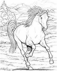 Wonderful World Of Horses Coloring Book