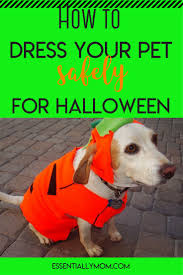 Spirit Halloween Montgomery Albuquerque by 18 Best From The Blog Images On Pinterest Pet Supplies The Blog