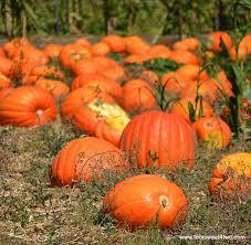 Varieties Of Pumpkins by 42 Types Of Pumpkins Toot Sweet 4 Two