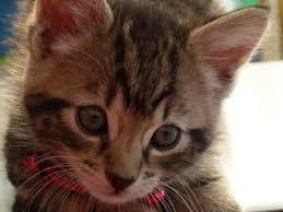 popular cat names top 10 most popular cat names in the uk