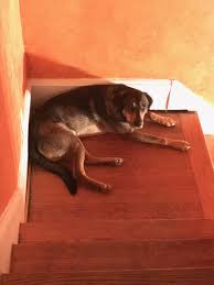 Bed And Biscuit Greensboro Nc by The Pet Shop Junior Has Some Breakout Skills Blog The Pet Shop