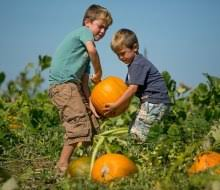 Pumpkin Picking Ct Best by Great Pumpkin Patches Abound In Fairfield County Mommypoppins