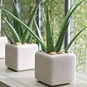 entretien plante grasse d interieur plantes grasses d intérieur entretien plantes jardinerie truffaut
