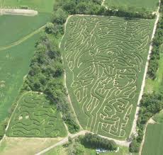Portland Pumpkin Patch Corn Maze by Cornfun Corn Maze Adventure Park And Pumpkin Patch Mi Corn Maze