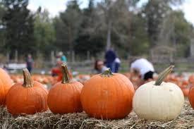Colorado Springs Pumpkin Patch 2017 by Fall Pumpkin And Harvest Festivals 2017 In Colorado The Denver Ear
