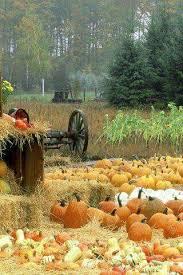 Free Pumpkin Patch Charleston Sc 9 best pumpkin farm images on pinterest pumpkin farm pumpkin