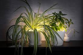 pflanzen im schlafzimmer ja oder nein das haus