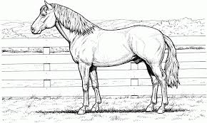Quarter Horse Coloring Pages Free Picture