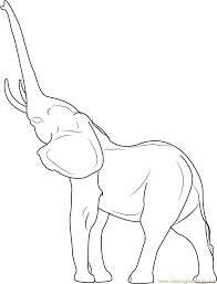 Young Indian Elephant Coloring Page
