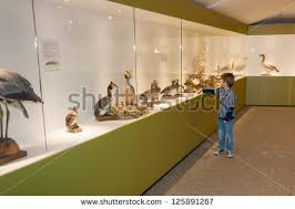 Little Child In Museum Pointing At Birds On Display A Cabinet