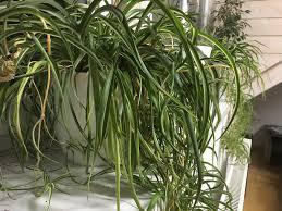 pflanzen für mehr luftfeuchte welche sind ideal