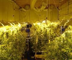 fabriquer une chambre de pousse comment fabriquer une salle de culture de marijuana d intérieur