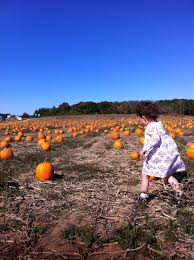 Pumpkin Picking Farm Long Island Ny by Pick Your Own U2014 Lewin Farms Homepage