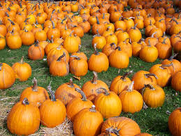 Free Pumpkin Patch In Katy Tx by What U0027s Happening In Houston This Weekend A Ghoulishly Good Time