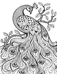 25 Unique Animal Coloring Pages Ideas On Pinterest