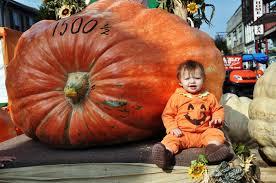 Ohio Pumpkin Festival by Pumpkin Beer Fest More Info