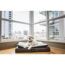 Serta Dog Beds by Serta Orthopedic Foam Quilted Couch Pet Bed Free Shipping Today