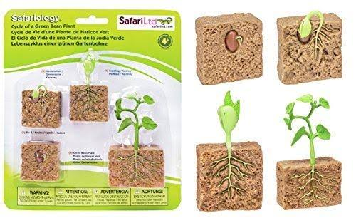 Safari 662416 Life Cycle of a Green Bean Plant Figurines