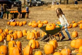 Half Moon Bay Pumpkin Festival Biggest Pumpkin by Pumpkin Festival 2017 Visit Half Moon Bay