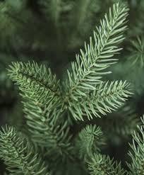 Silvertip Fir Christmas Tree Artificial by Lake Forest Fir Snap Tree Tree Classics