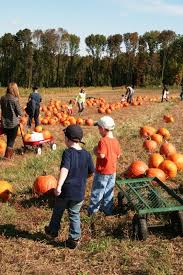 Pumpkin Picking In Chester Nj by Apple Picking At Riamede Farms In Morris County Pick Your Own