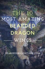 Bearded Dragon Shedding Process by 25 Best Bearded Dragon Cage Ideas On Pinterest Bearded Dragon