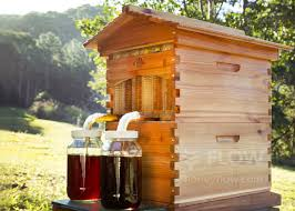 This Author Bought A Flow Hive: What Happened Next Will Amaze You! Hive Time Products A Bee Adventure For Everyone Bkeeping Everything You Need To Know Start Your First Best 25 Raising Bees Ideas On Pinterest Honey Bee Keeping The Bees In Your Backyard Guide North Americas Joseph Starting Housing And Feeding Top Bar Beehive Projects Events Level1techs Forums 562 Best Images Knees 320 Like Girl 10 Mistakes New Bkeepers Make Splitting Hives Increase Cookeville Bkeepers Nucleus Colony Or How A 8 Steps With Pictures