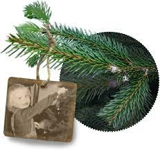 Christmas Tree Saplings Ireland by Dutchman Tree Farms Homepage