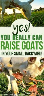 25+ Unique Backyard Farming Ideas On Pinterest | What Is Farming ... How To Start A Backyard Farm Animals Backyards And Veggies More Restaurants Try Farming Cpr These Folks Feed Their Family With Garden In Swimming Pool Started Spin Cornell Small Program Friday The Coop Is Almost Complete The Empty Sheeps Lambs Hens Youtube On An Acre Or Less Living Free Guides Dandelion House Chalkboard Thoughts Series Cnection Planning A Bee Garden Pictures On