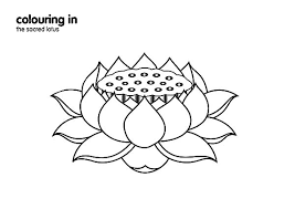 Lotus Flower Fruit Coloring Pages