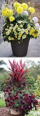 Citronella Lamp Oil Tesco by 46 Best Outdoors Images On Pinterest Gardening Pots And Landscaping