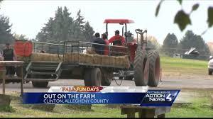 Waimanalo Pumpkin Patch And Corn Maze by Fall Fun Days Hozak Farms Youtube