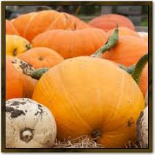 Illinois Pumpkin Patch 2015 by 12 Best Pumpkin Patches Around Chicago Images On Pinterest