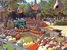 Pumpkin Patch Alabama Clanton by Enter The Corn Maze At Pigeon Roost Farm Escape2lc U2026 Pinteres U2026