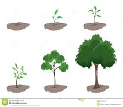 Stages Of Pumpkin Growth by Stage Of Growth Of The Tree Illustration 48621032 Megapixl