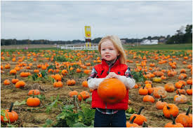 Pumpkin Farms In Southern Maryland by Birds Of A Feather Photography Blog Pumpkin Patch