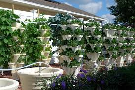 Hydroponic Home Garden - Backyard Food SolutionsBackyard Food ... Hydroponic Home Garden Backyard Food Solutionsbackyard Oc Aquaponics Project Admin What Is Learn About Aquaponic Plant Growing Photos Friendly Picture With Amusing Systems Grow 10x The Today Bobsc Ezgro Amazoncom Vertical Gardening Vegetable Tower Indoor Outdoor From Fish To Ftilizer Greenhouse Im In My City Back Yard Yes I Am Satuskaco