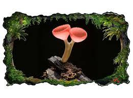 3d wandtattoo abstrakter pilz auf braunen ast bild selbstklebend wandbild sticker wohnzimmer wand aufkleber 11h155 3dwandtattoo24 de
