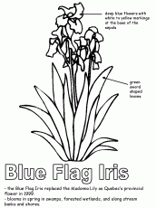 Quebec Flag Colouring Pages