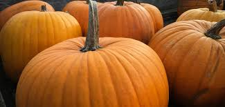 Green Mountain Pumpkin Spice K Cups Calories by 7 High Protein Snacks Under 200 Calories