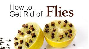 How To Get Rid Of Flies In Backyard | Outdoor Goods 7 Tips For Fabulous Backyard Parties Party Time And 100 Flies In Get Rid Of Best 25 How To Control In Your Home Yard Yellow Fly Identify Of Plants That Repel Flies Ideas On Pinterest Bug Ants Mice Spiders Longlegged Beyond Deer Fly Control Pest Chemicals 8008777290 A Us Flag Flew Iraq Now The Backyard Jim Jar O Backyard Chickens To Kill Mosquitoes Mosquito Treatment Picture On And Fascating