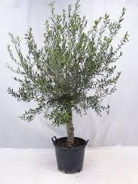 9 pflegeleichte große zimmerpflanzen für daheim büro