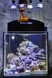 aquarium nano eau de mer nouveau nano 36 litres aquarium récifal aquarium marin