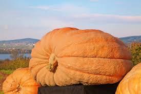 Worlds Heaviest Pumpkin Pie by 100 Halloween Fun Facts Dark Shadow Ghost Tours
