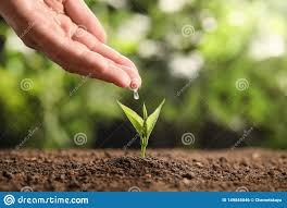 100 Seedling Truck Farmer Pouring Water On Young In Soil Against