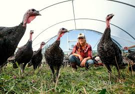 Worth The Effort: Snohomish Farm Raises Heritage Turkeys ... Raising Turkeys Morning Routine Youtube 117 Best Helpful Tips And Tricks For Livestock Pets Images On What Do Wild Turkeys Eat Feeding Birds Your Homestead Homesteads Turkey 171 Ducks Geese Guineas Farm Tales A Holiday Feast In Our Own Backyard Free 132 Pinterest Backyard Chickens 1528 Chickens Coops Chicken How To Raise Hgtv Bring Up Other Fowl