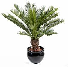 prix des palmiers exterieur palmier exterieur prix